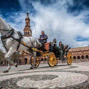 sevilla, horse, spain